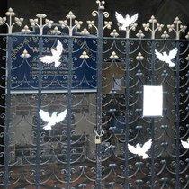 Doves3_crop.width-1200.jpg
